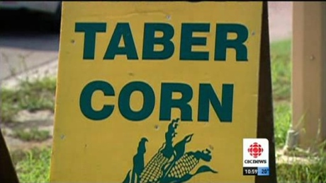 Taber Corn Sign. Believe it or not, this is an upgrade from the old signs.